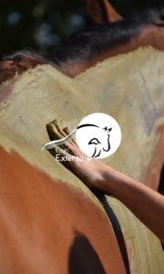 Equin'Extenso